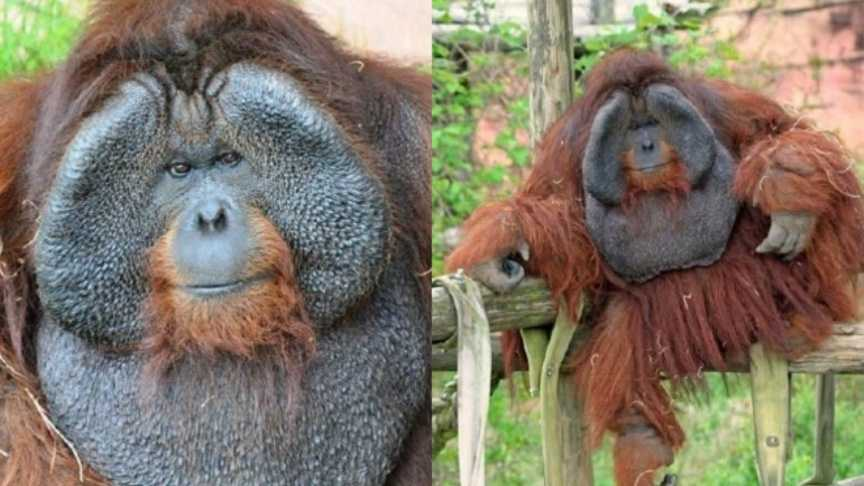 _Rok Orangutan_0060.jpg