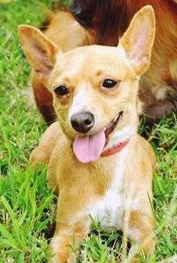 Terrier Mix • Adult • Female • Smallhttps://www.petfinder.com/petdetail/33298410