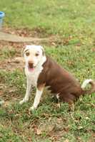 Shar Pei & Hound Mix • Adult • Female • Largehttps://www.petfinder.com/petdetail/25260803Please call Sandy for more information: 918-427-3886Mariah is a friendly girl who wants to be loved and never be left outside to be lonely again. She is about 2 1/2 years old and strong dog who will need a lot of exercise.