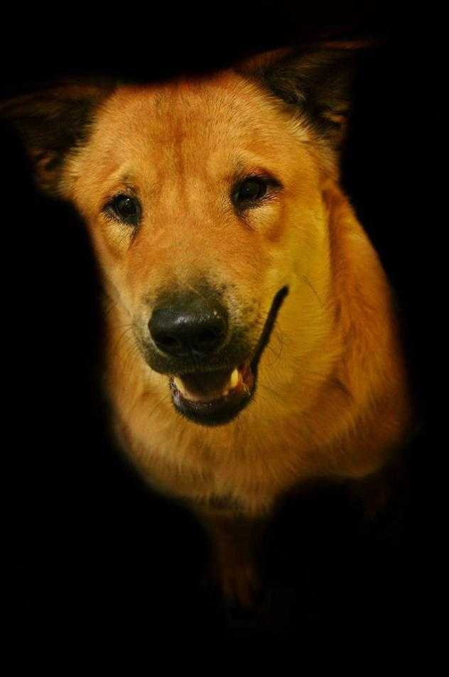 Chow Chow Mix • Adult • Male • Largehttps://www.petfinder.com/petdetail/34119943