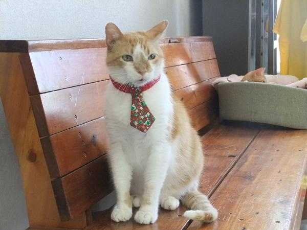 Orville, Bella Vista Animal Shelter, 479-855-6020