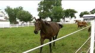 galloping horses - 794897