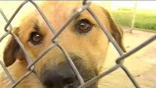 Liberty animal shelter dog