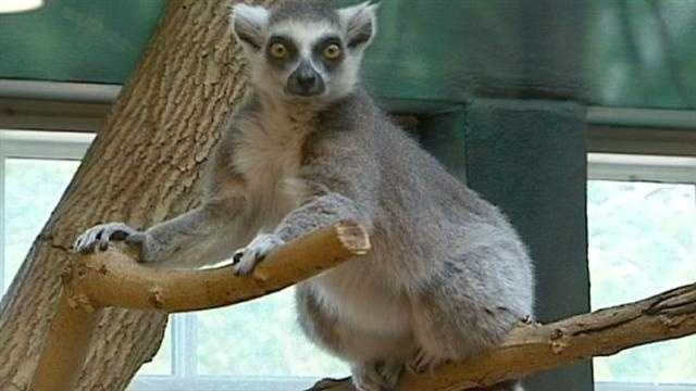 Kansas City Zoo braces for huge crowds, heat