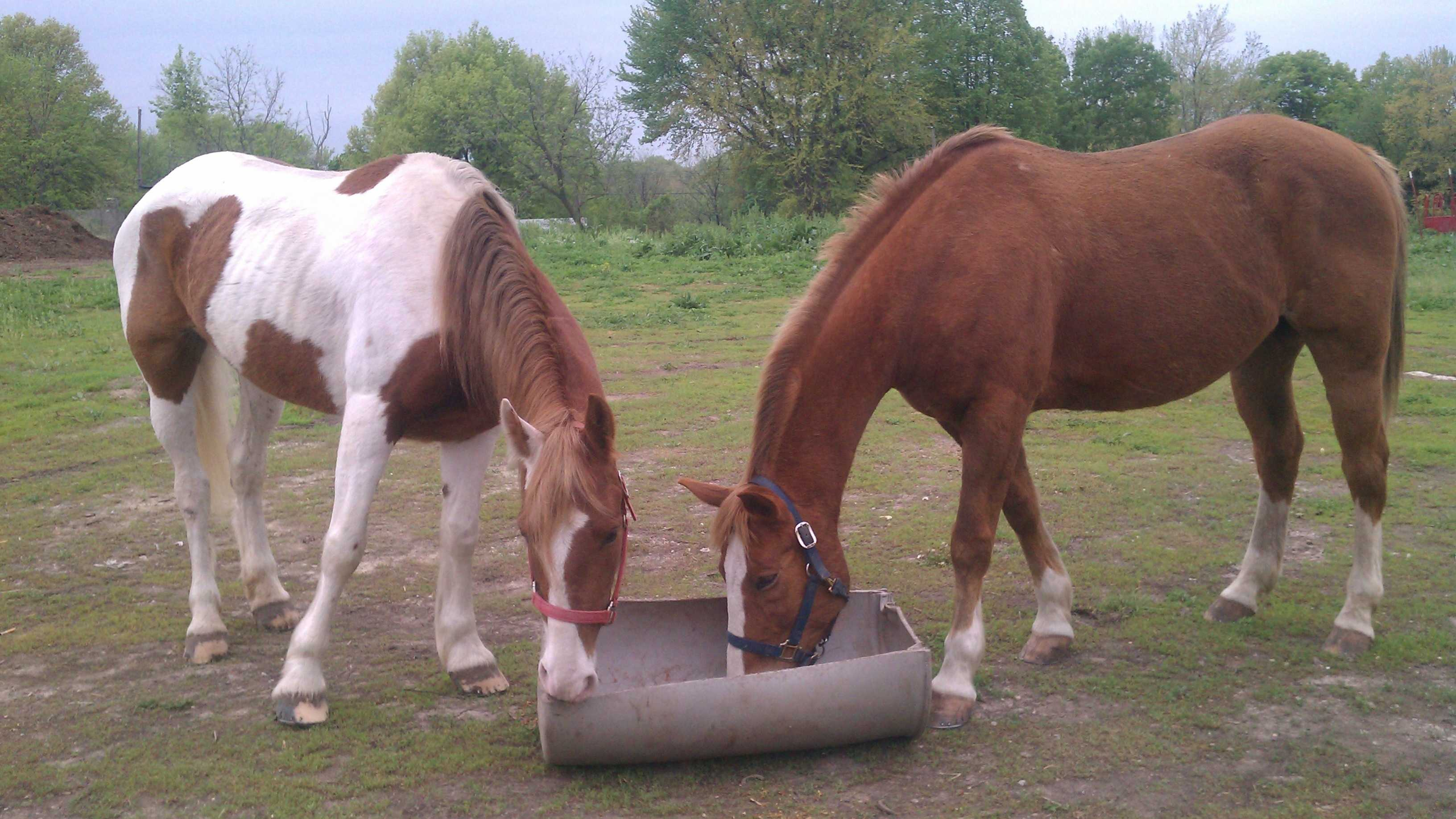 Kizzy (left), the horse that visited a Waldo neighborhood after escaping a birthday party, is back with Kokomo.