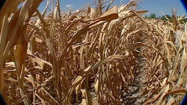 Farmers assess bleak crop outlook in drought