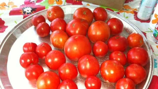 Larry Moore's tomatoes