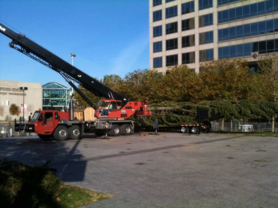 The mayor's Christmas tree arrived Thursday at Crown Center Square.