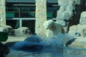 From the Kansas City Zoo: Kansas City Zoo is open 9:30 a.m. – 4 p.m. daily, November through February.