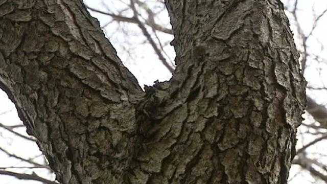 Image Tree limb