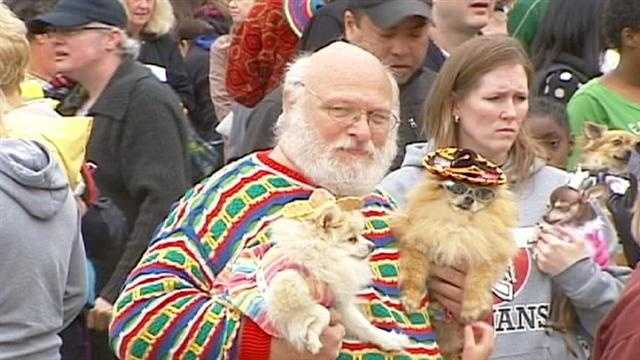 The annual Kansas City Chihuahua Parade brought people downtown to celebrate Cinco de Mayo with their four-legged friends on Sunday. Parade organizers were making another attempt to break the world record for having the most dogs in costume. St. Louis holds the existing record with 1,350 dogs. Organizers said the cool, damp weather may have kept some participants at home.