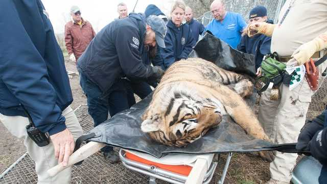 Image Tiger Seized