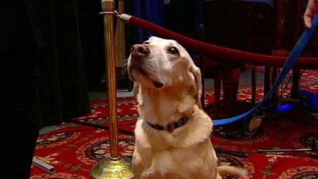 Image Diego - dog honored at KC event
