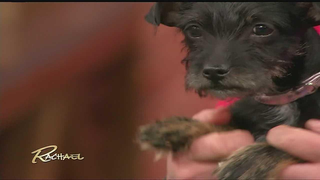 Kia, the puppy who survived a month trapped in a car in the Kansas City impound lot, gets her moment in the national TV spotlight Friday morning.