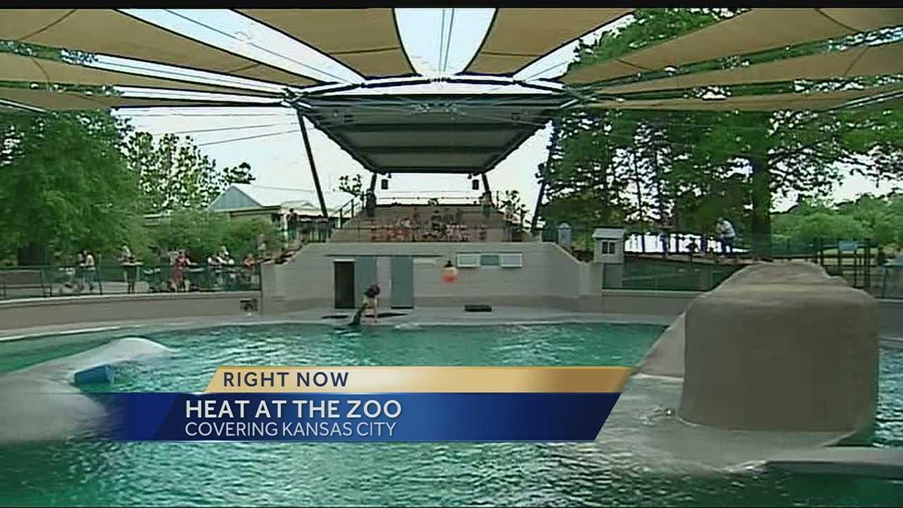 Image Heat at the KC Zoo