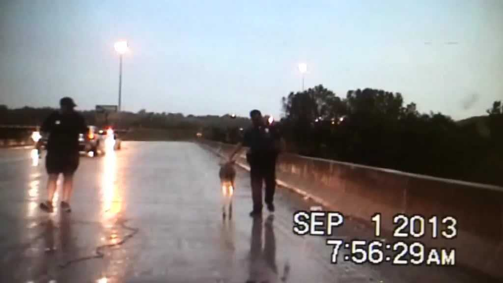 A Kansas City police officer guides the deer off the road.