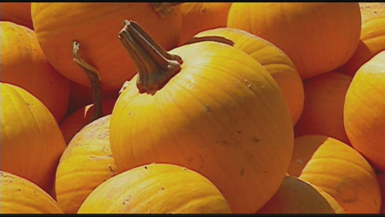 Image Pumpkins (generic)