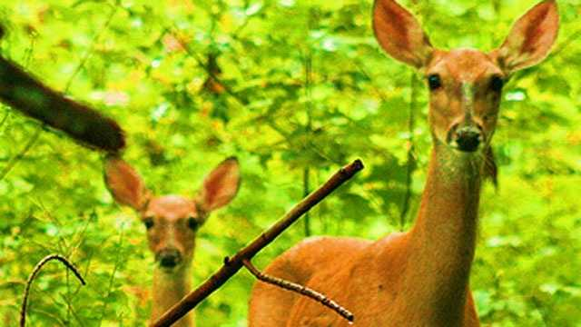 Kansas Department of Wildlife, Parks and Tourism biologist Lloyd Fox says fall is also when many deer move to new locations as crops are harvested.