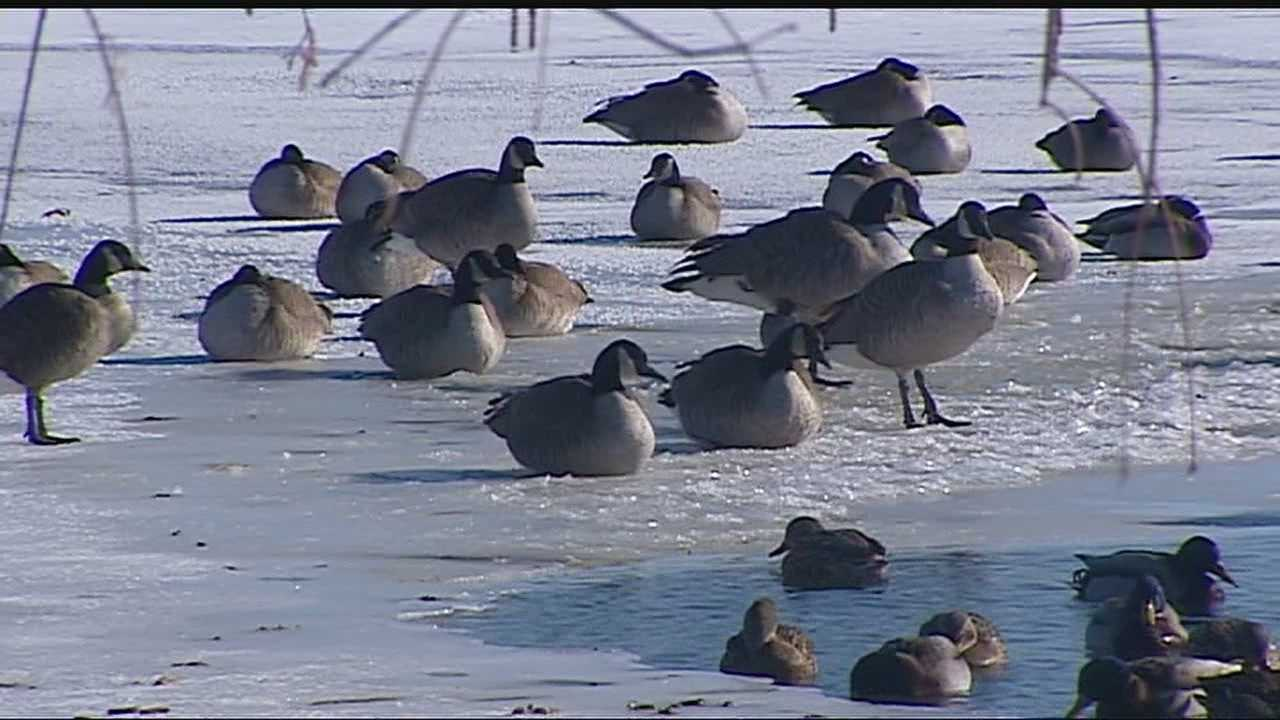 Image Geese on frozen pond