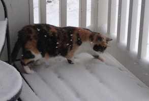 "Kathi's ""fur kid"" ventures into the snow"
