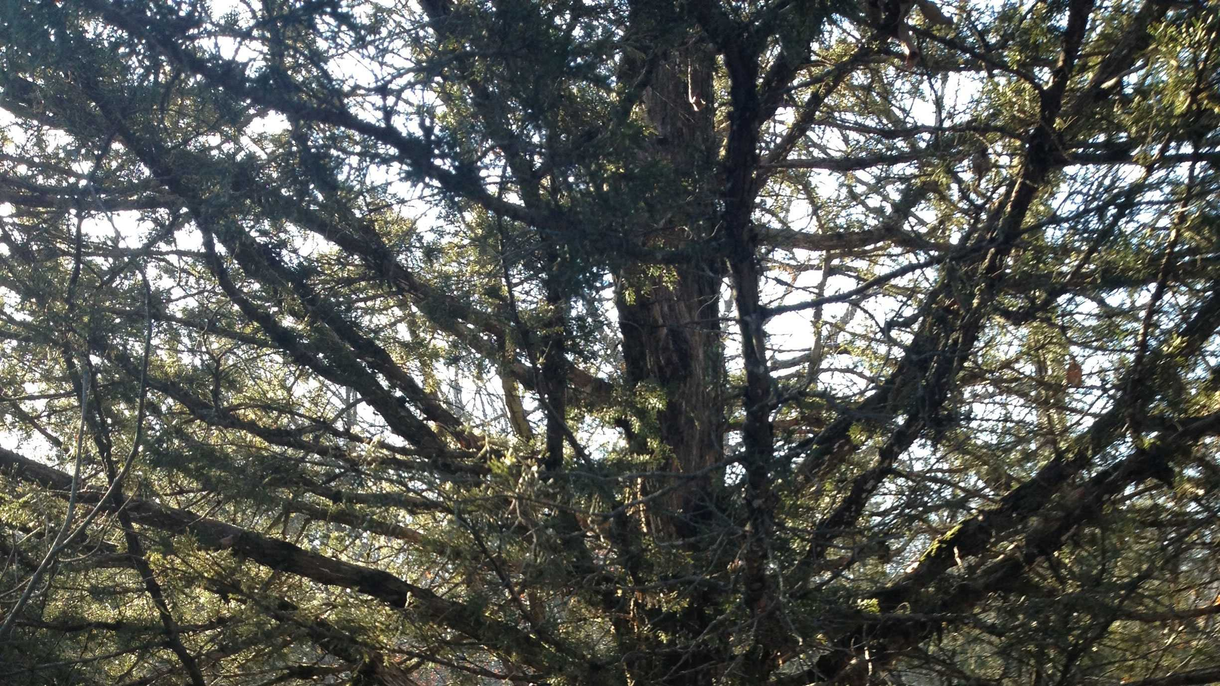 money from bank robbery found hidden in tree