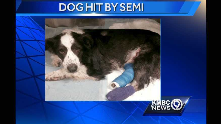 Image Jennifer - dog struck by truck