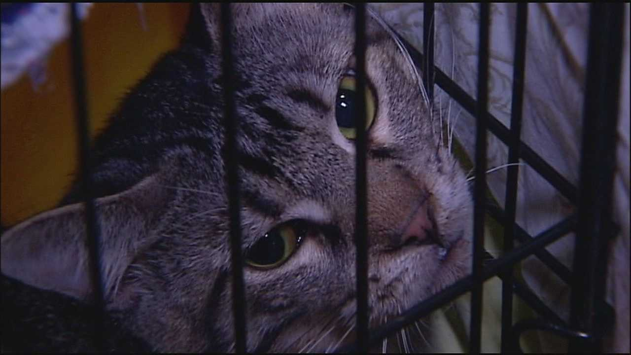 The KC Pet Project is taking in between 100-150 cats and kittens that were seized during a hoarding investigation at a Northland apartment complex.