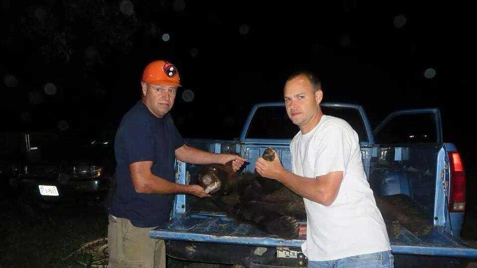 Bear hit in central Missouri