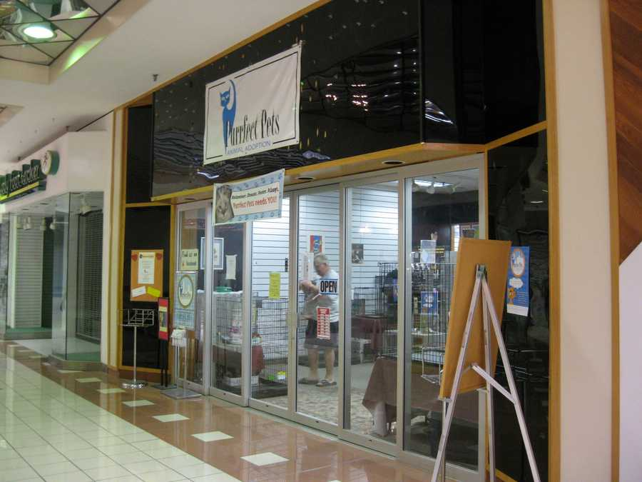 Purrfect Pets, a cat adoption center, is moving to the Great Mall of the Great Plains in Olathe.