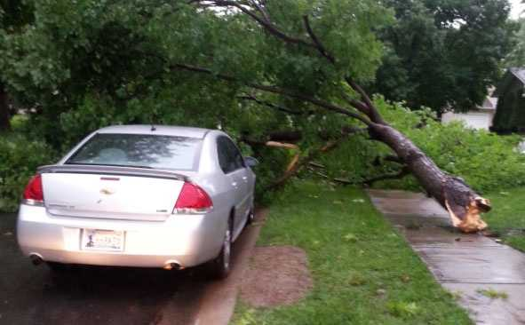 Tree down in Loma Vista neighborhood