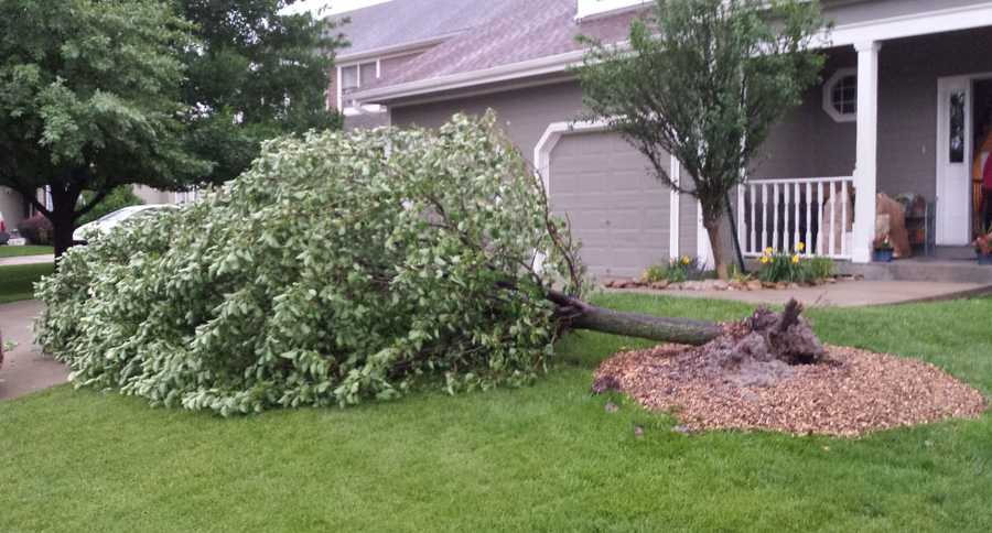 Downed tree in western Shawnee