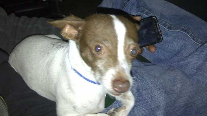 Image Dog dies in carjacking