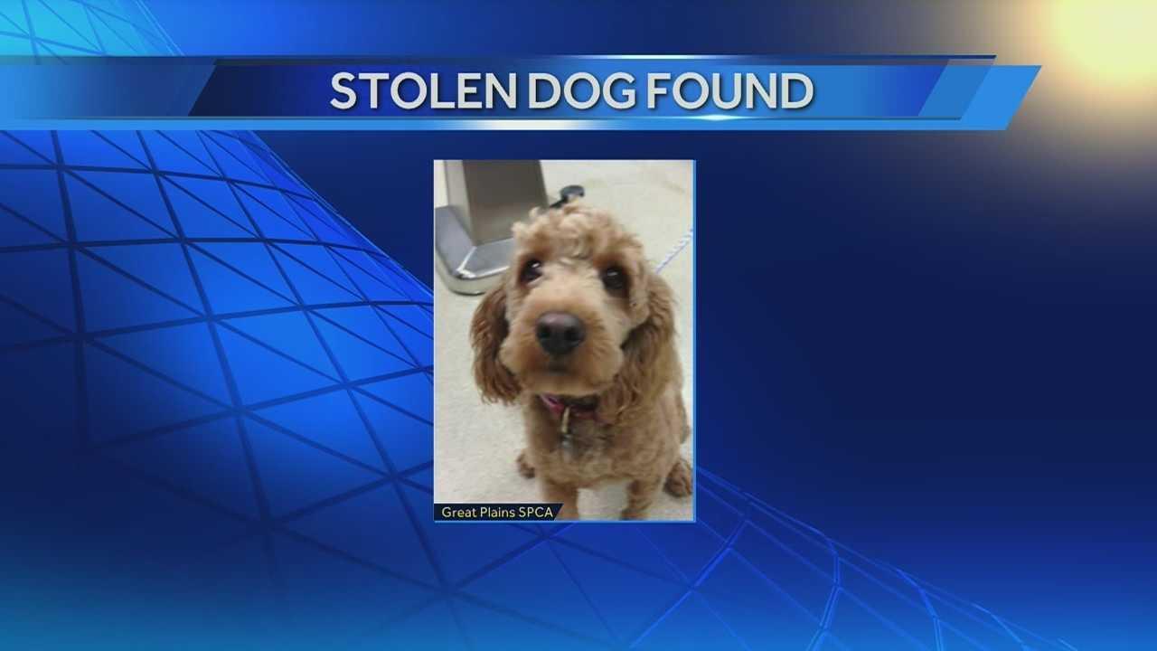 Image Alfie the stolen dog returned