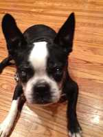 Does Erin have any pets? 2 Boston Terriers...Max & Molly