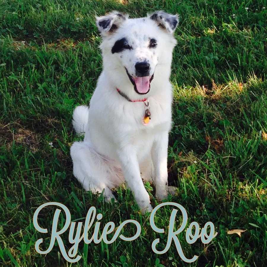 Karlie Rae Stecklein – Rylie Roo
