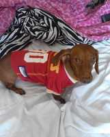 Barkley is a #1 Chiefs fan.