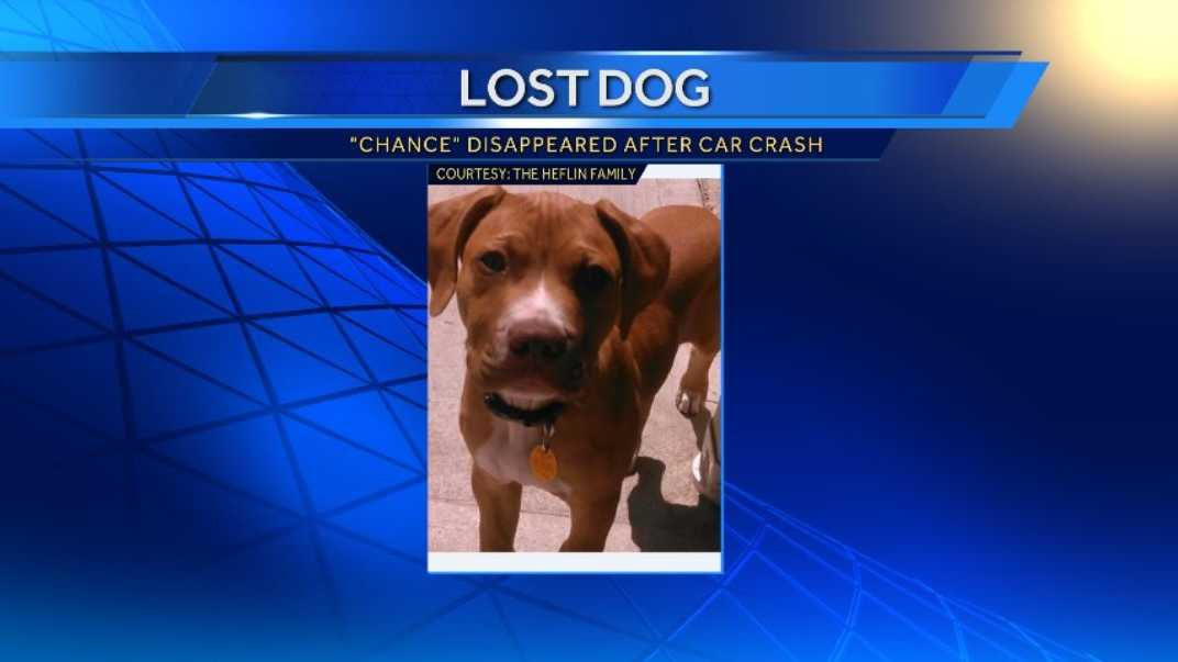 "An Independence family is searching for its lost puppy, ""Chance,"" after he went missing following a car crash."