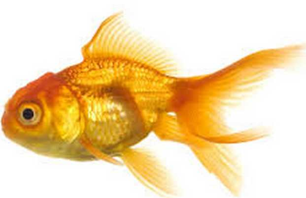 """Does Stephanie have any pets? """"Buddy, our fish,"""" Stephanie said. """"He's hanging on, 9 months strong!"""""""