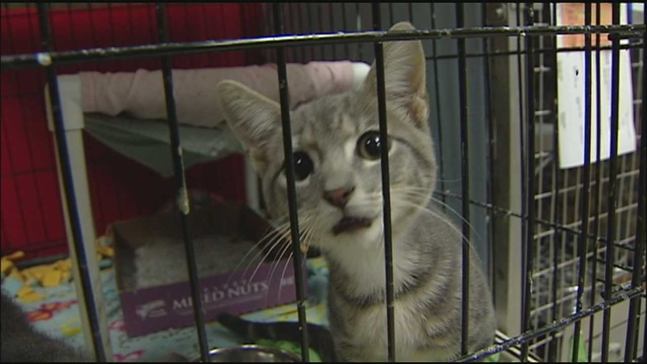 A wave of owners surrendering pets has left the KC Pet Project with the largest number of animals it's had since 2007.