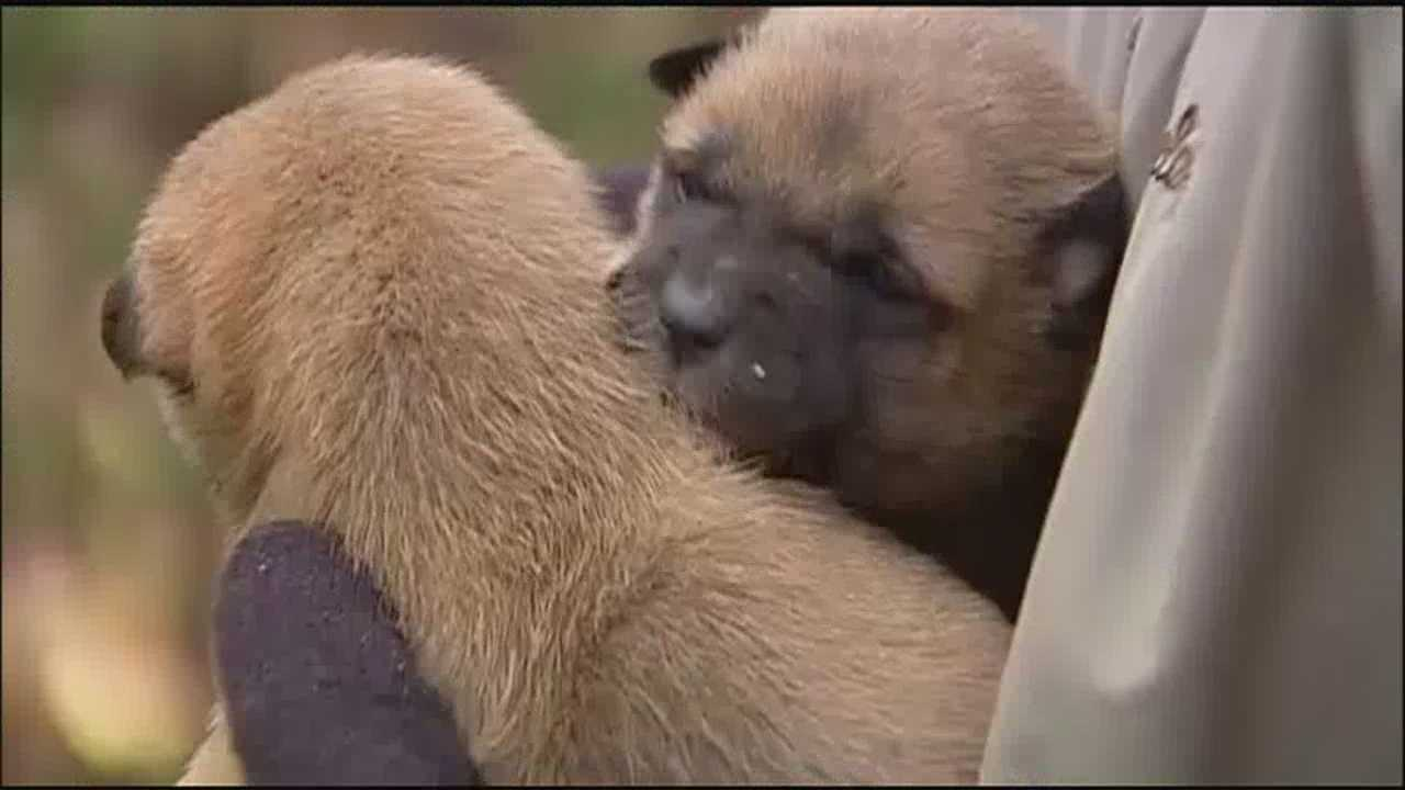 Chain of Hope helped to rescue six 3-week-old puppies who were born to a stray and have been out in the freezing temperatures.