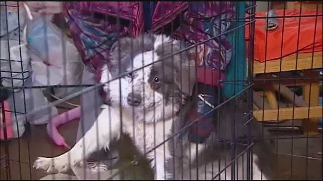 Kansas City's Chain of Hope has helped pet owners by delivering food and other supplies to help their dogs and cats stay warm during the coldest weater of the winter so far.