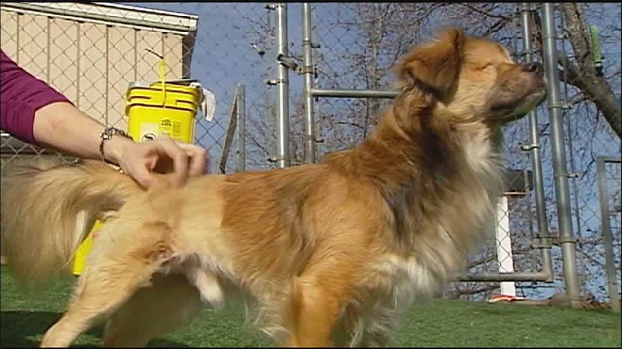 A dog who made national headlines after being strangled, beaten and thrown from a balcony is making great strides at the KC Pet Project and may soon be in a forever home.