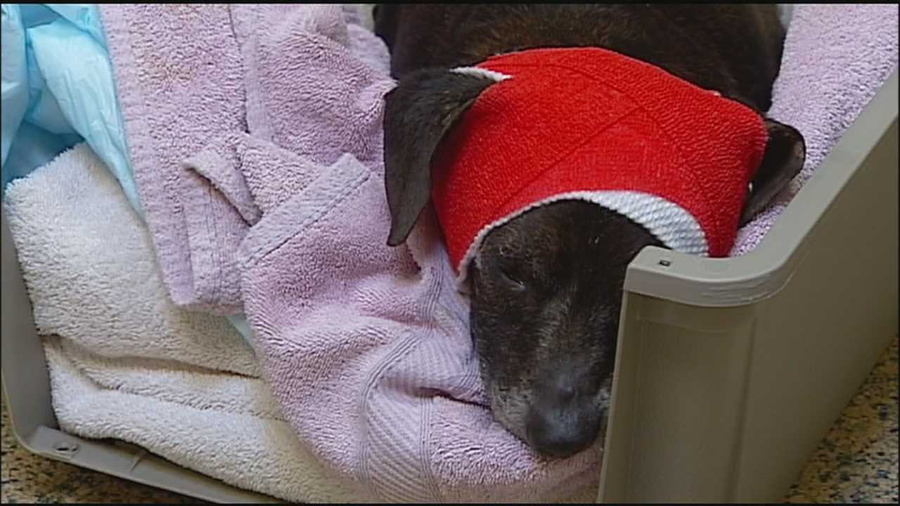A driver who thought someone had thrown a trash bag from a car onto Interstate 435 was stunned when she discovered that it was a dog. She took the dog to get help and he is expected to survive.