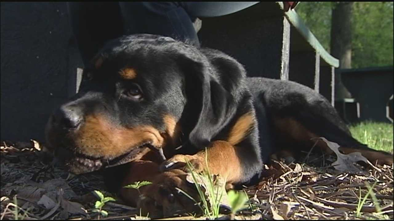 A puppy that disappeared after a rollover wreck on Interstate 470 Sunday has been reunited with his family.