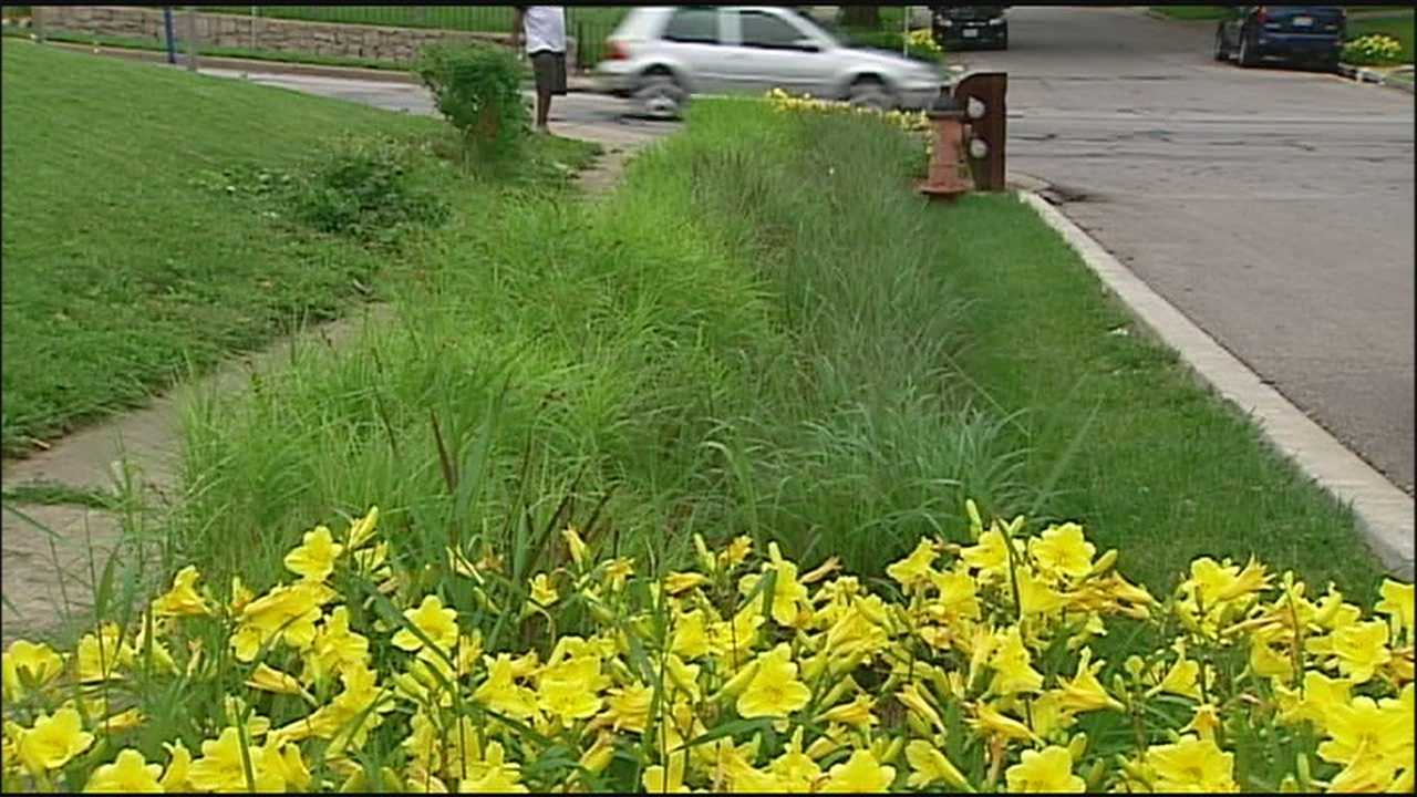 Kansas City is using plants on the side of the road to help soak up some of the city's extra water.
