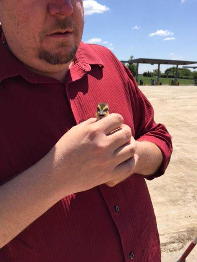 A WaterOne employee holds the duckling after it was rescued from a storm drain at the company's fleet yard.
