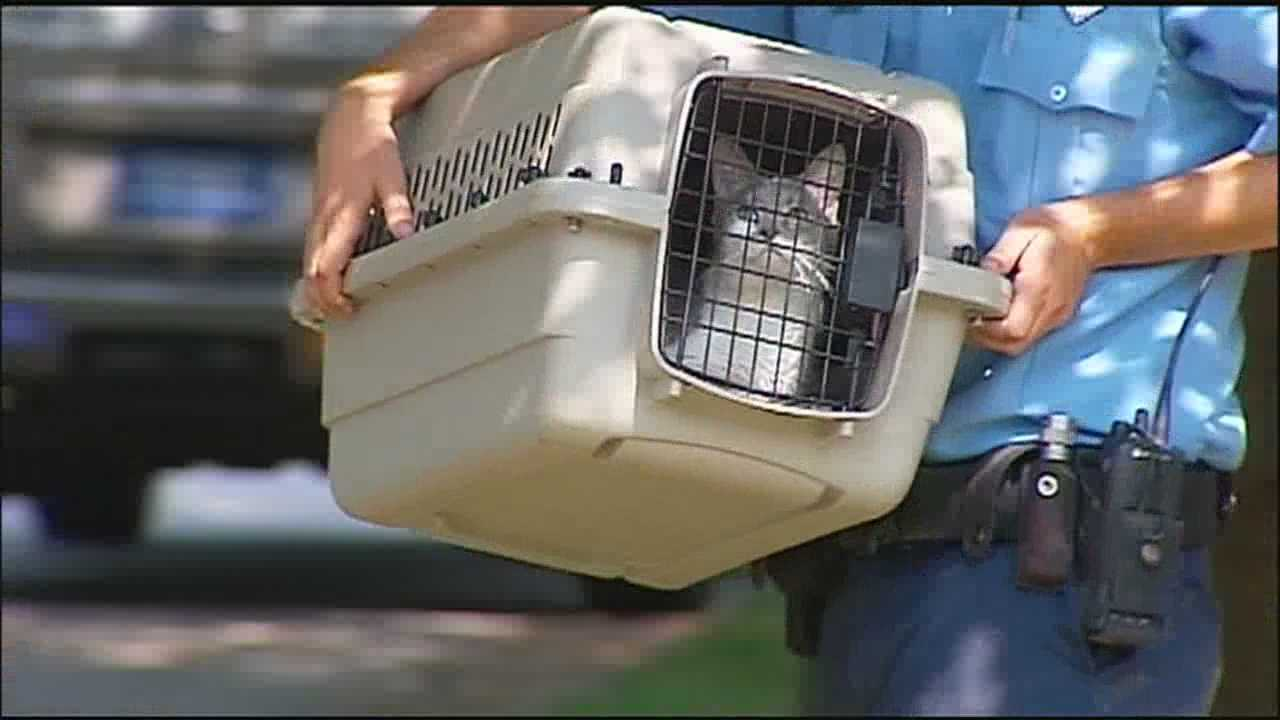 Kansas City Animal Control officers removed dozens of cats from a woman's home Wednesday afternoon.
