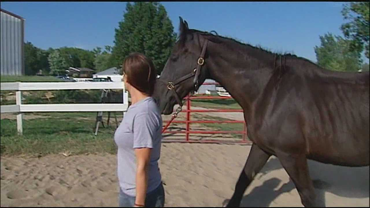 Rescue organization helps horses recover from abuse, neglect