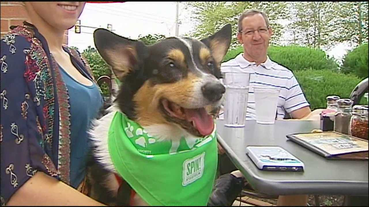 Puppies and pizza aren't usually things that go together, but they did on Sunday afternoon in Olathe.