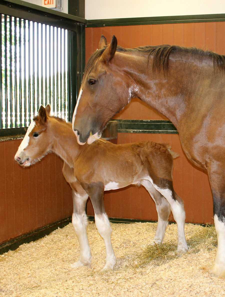 Moose was born Sept. 12.